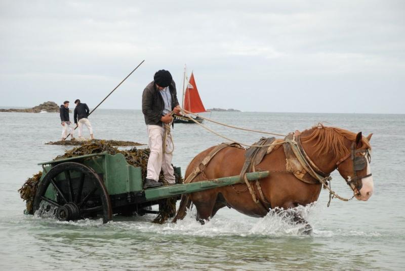 Kezeg ar mor (Les chevaux de la mer) Goem_044