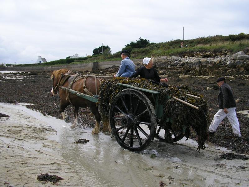 Kezeg ar mor (Les chevaux de la mer) Goem_310