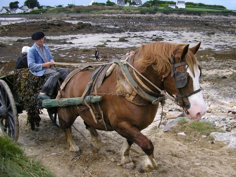 Kezeg ar mor (Les chevaux de la mer) Goem_311