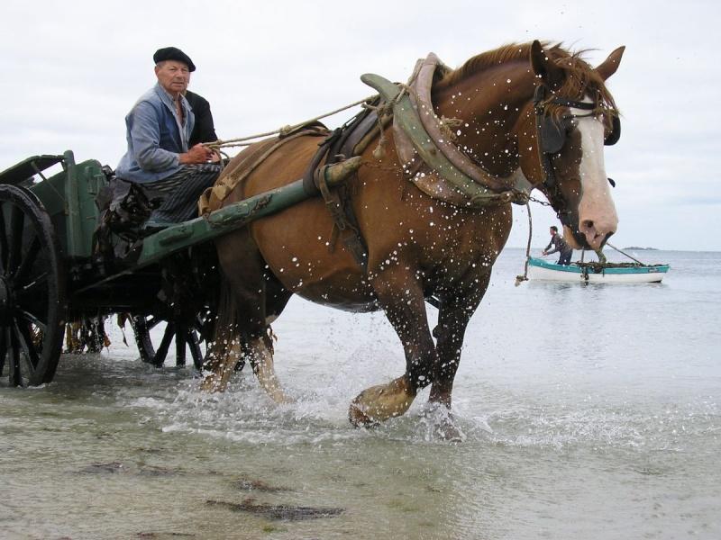 Kezeg ar mor (Les chevaux de la mer) Goem_712