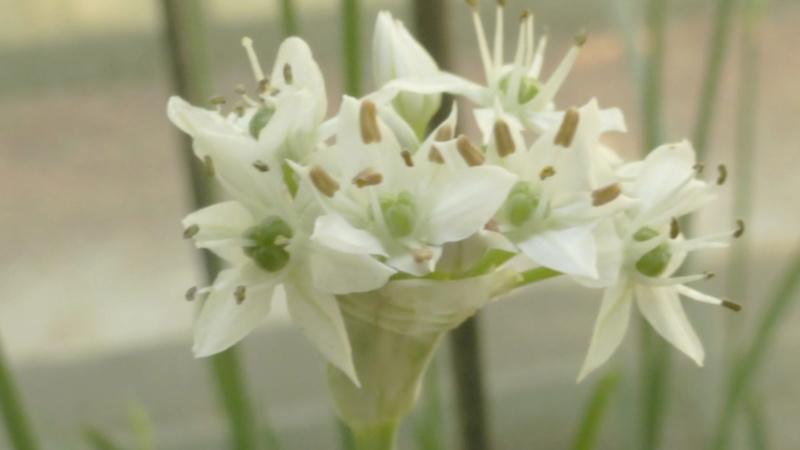 Quelques plantes utilitaires  P1210722