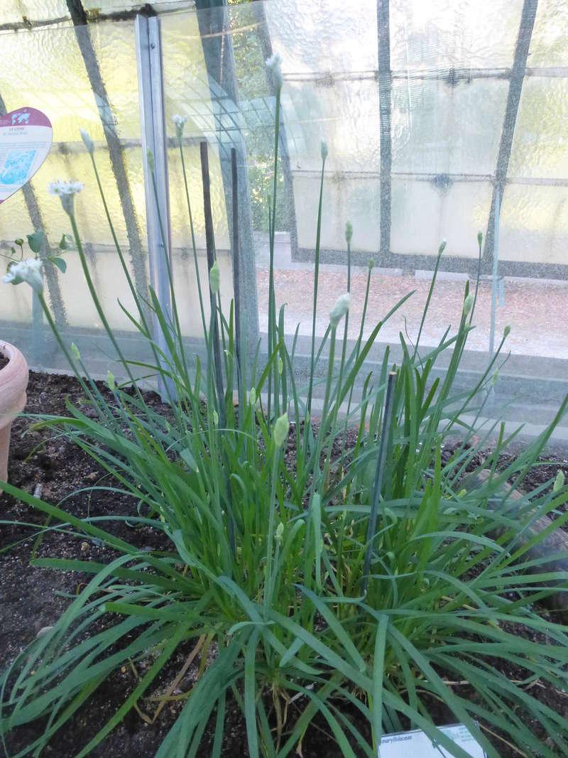 Quelques plantes utilitaires  P1210725
