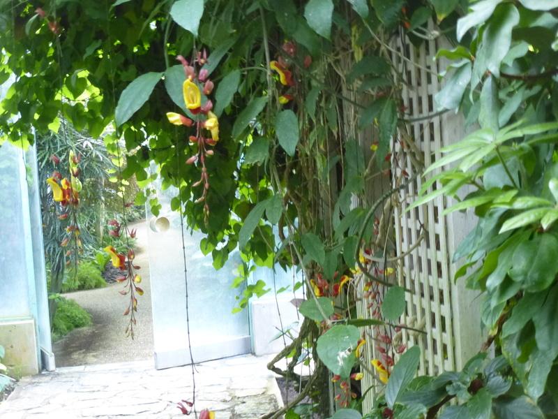 Ambiance tropicale  dans la  serre du même nom  P1210726