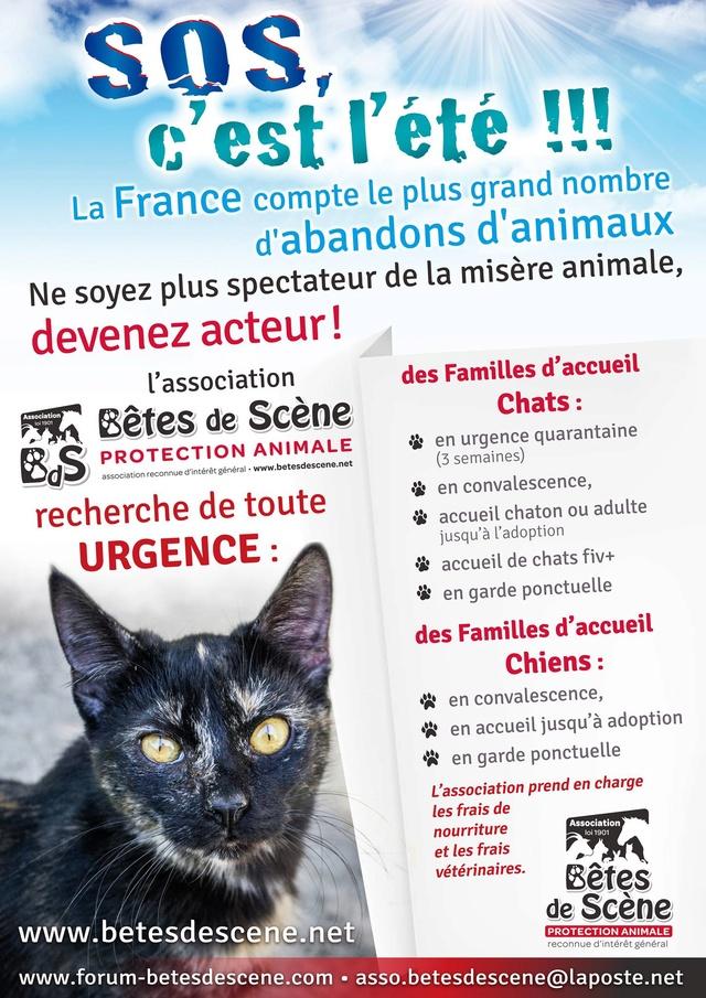 Affiches recherches FA chiens/chats 13699410