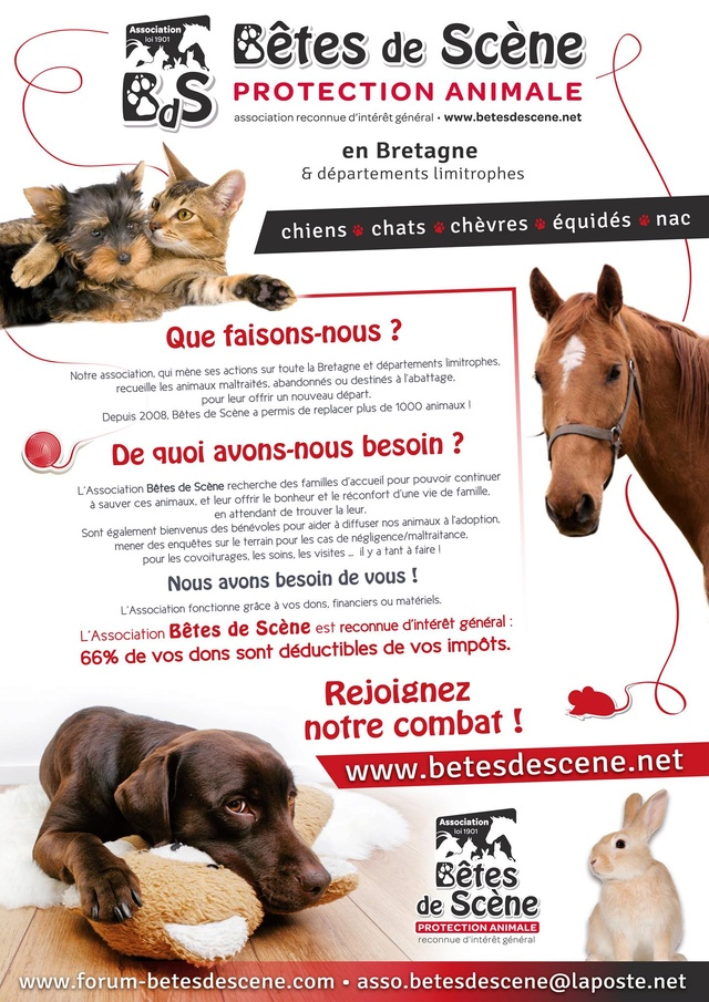 Affiches recherches FA chiens/chats 13720510