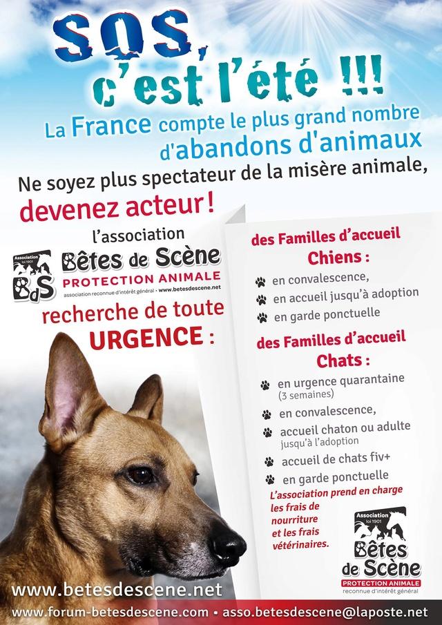 Affiches recherches FA chiens/chats 13730610