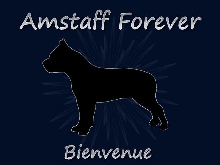 amstaff-forever