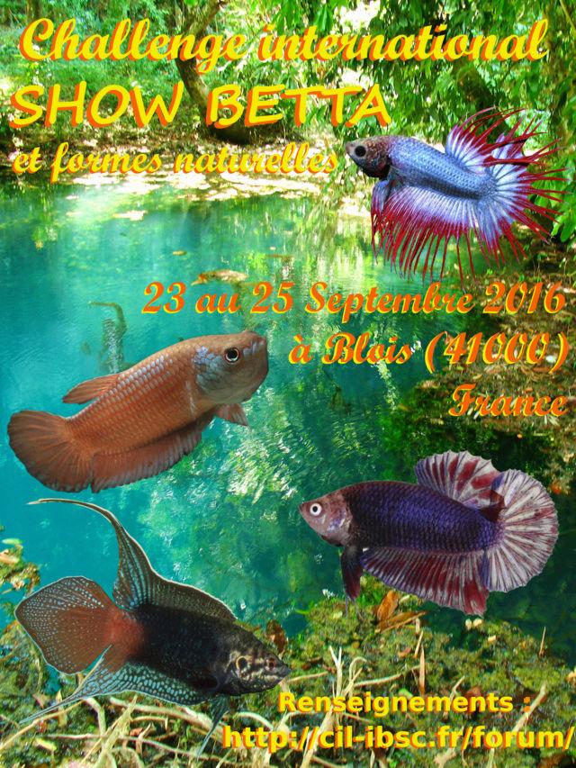 Challenge international Blois 2016 V03_af12