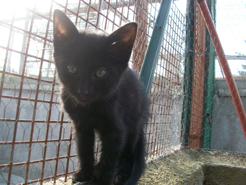 PARIS (chaton mâle noir) 101_2722