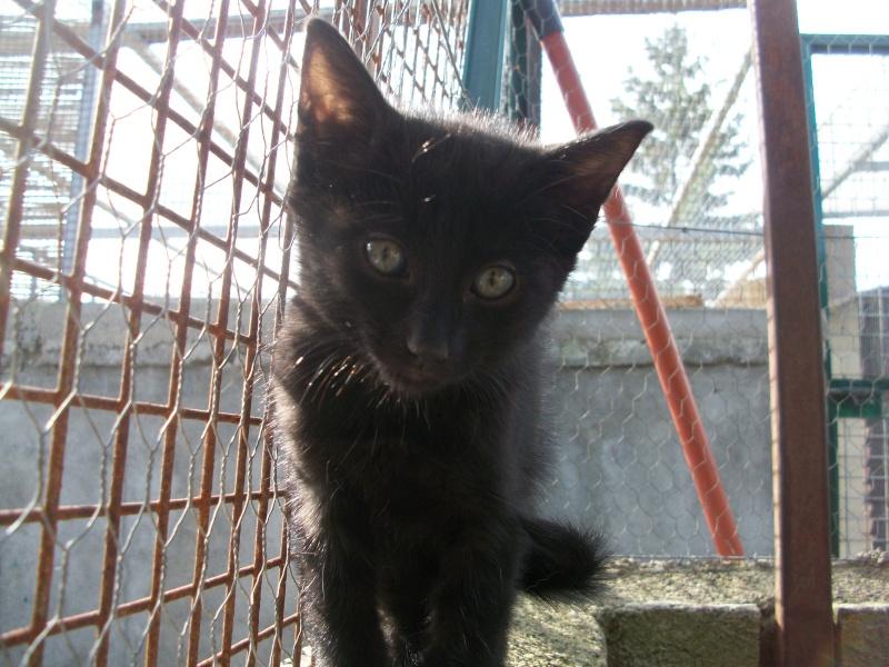 PARIS (chaton mâle noir) 101_2723