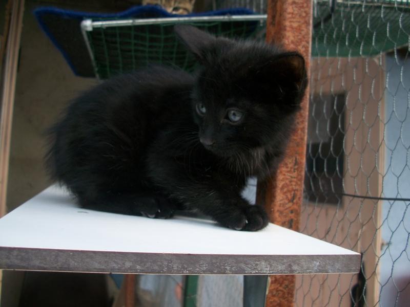 PARIS (chaton mâle noir) 101_2724