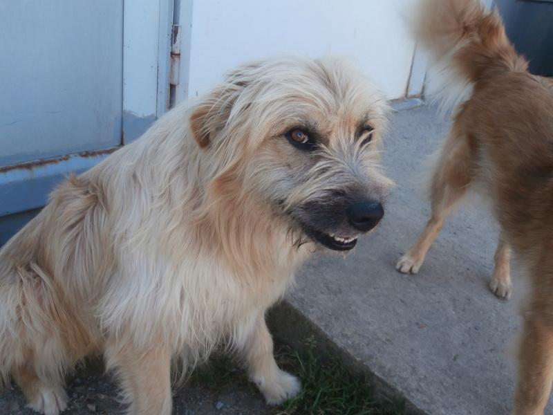 FARFADET (chien croisé labry) P8234411
