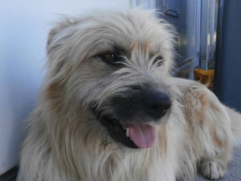 FARFADET (chien croisé labry) P8234412