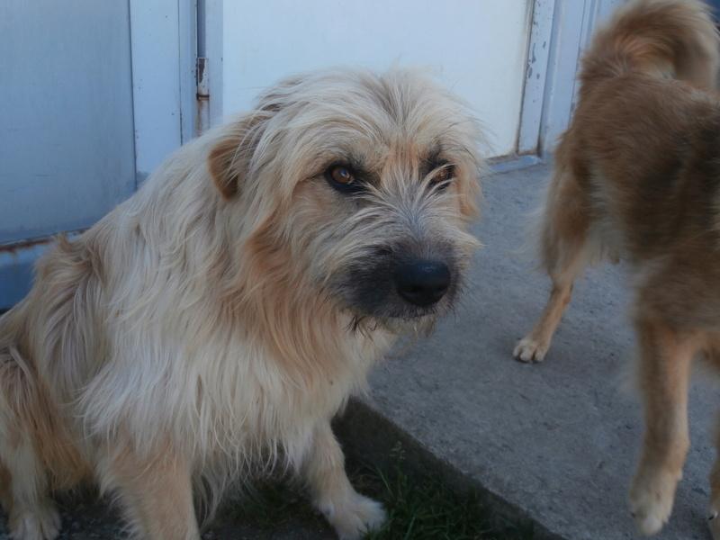 FARFADET (chien croisé labry) P8234413