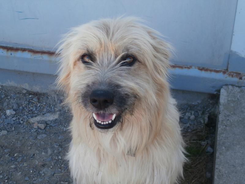 FARFADET (chien croisé labry) P8234414