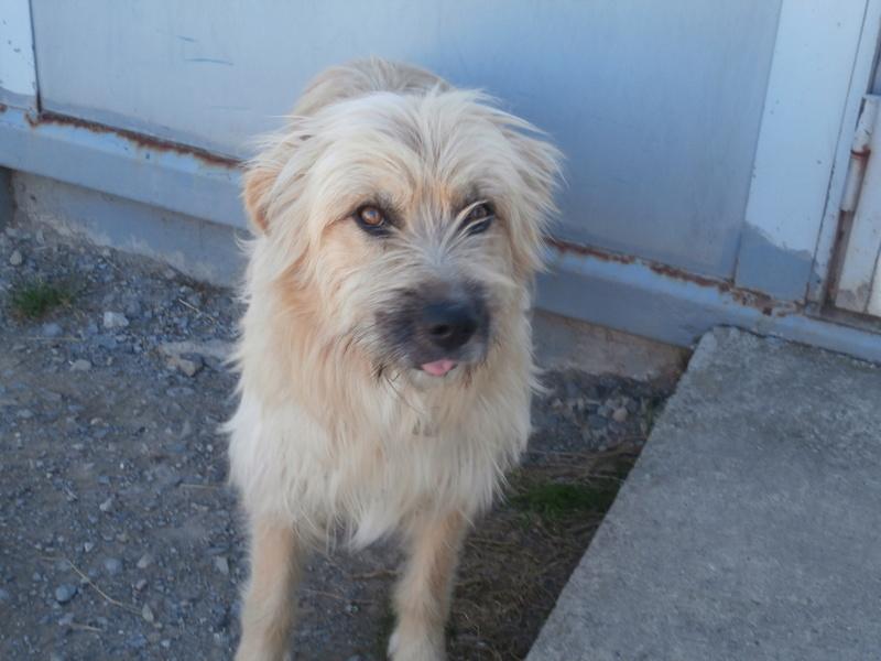 FARFADET (chien croisé labry) P8234415