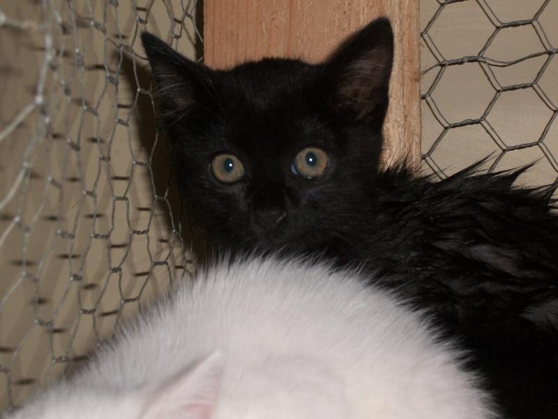 PEPITO (mâle européen noir) Papin_12