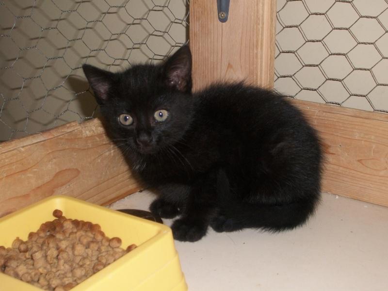 PEPITO (mâle européen noir) Papin_15