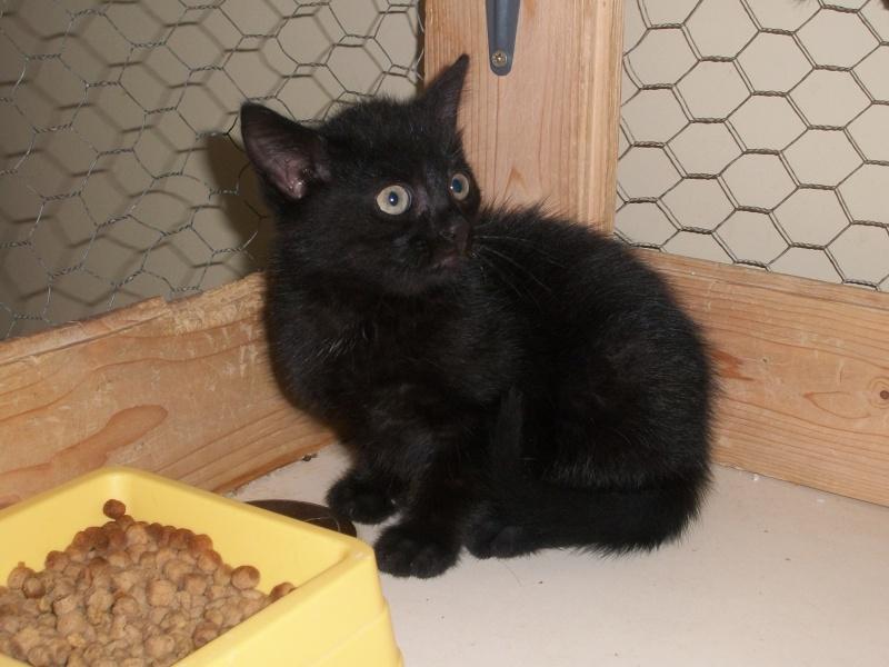 PEPITO (mâle européen noir) Papin_16