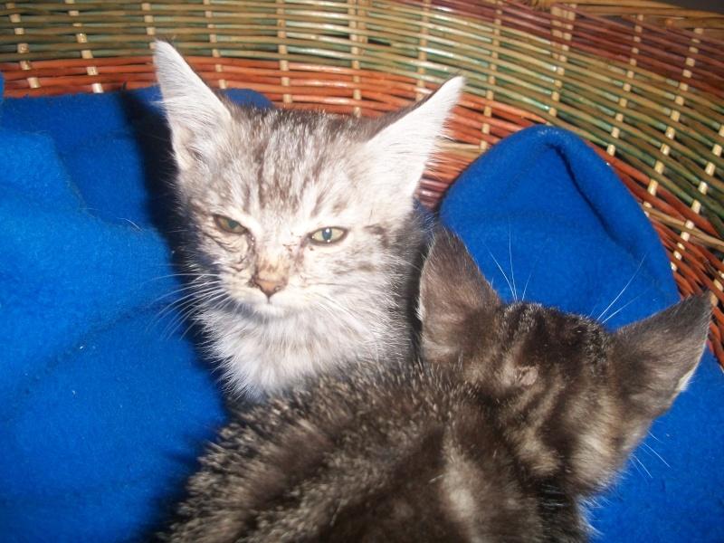 Romy (chaton tigrée claire) Photos11