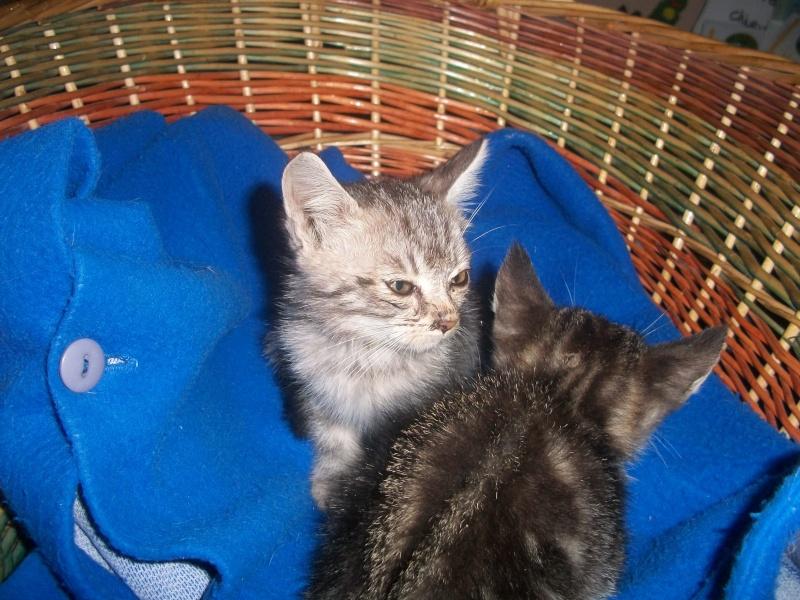 Romy (chaton tigrée claire) Photos12