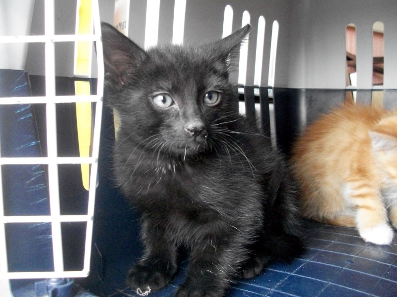 PARIS (chaton mâle noir) Sancho18