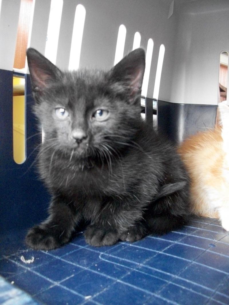PARIS (chaton mâle noir) Sancho19