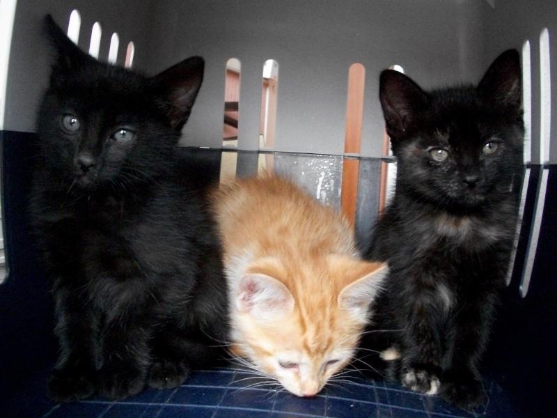 PARIS (chaton mâle noir) Sancho28