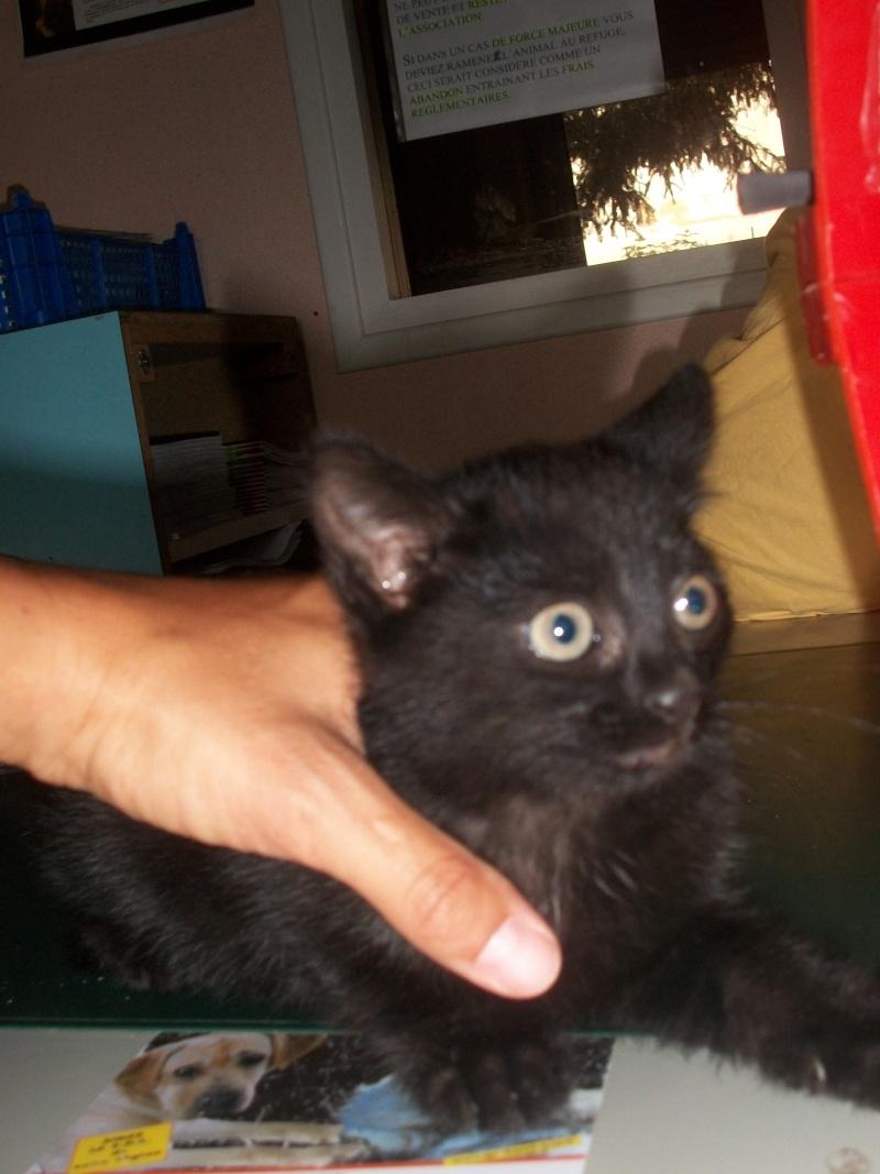 PEPITO (mâle européen noir) Vacanc15