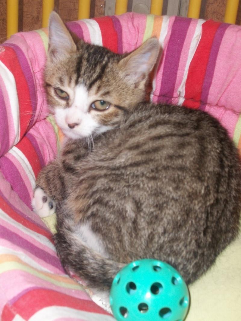 MIKA (chaton tigré et blanc) Vacanc17