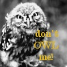 An Icon a Day... - Page 4 Owl_bm10
