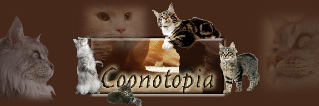 Coonotopia