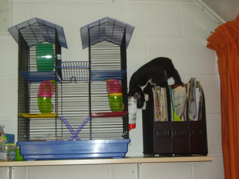 Cage pour rongeurs à vendre Calyps10