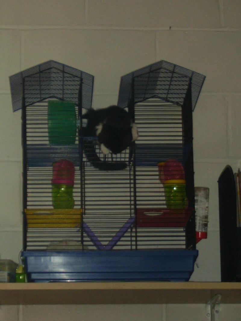 Cage pour rongeurs à vendre Calyps12