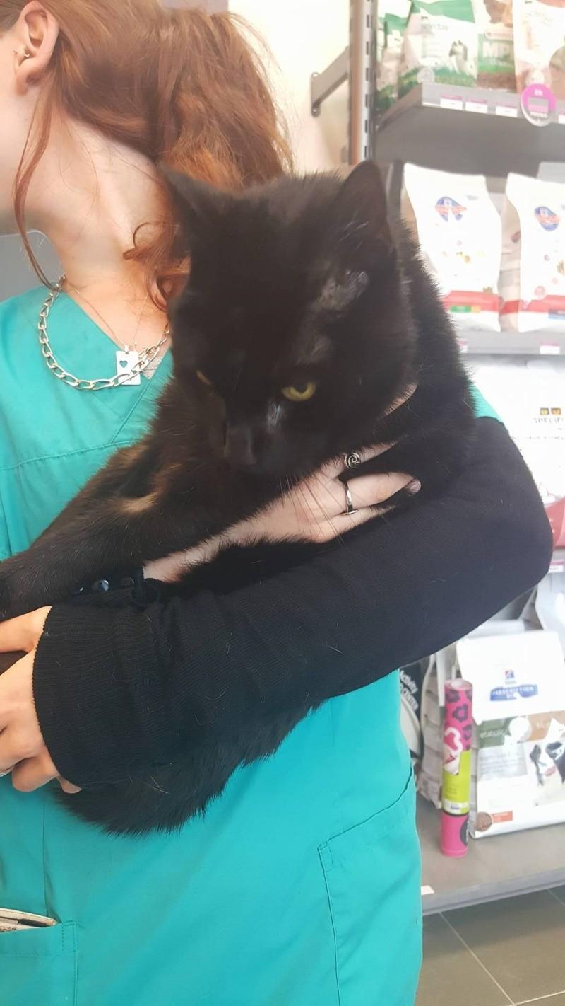 KREAT - chat mâle errant, 14 ans environ - ( MEUSE 55 ) 13405310