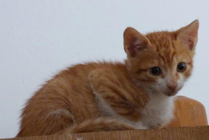 BOUCHON - chaton mâle, né avril 2016 - En FA chez Florin (PASCANI) Boucho12