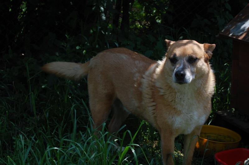 REXOU - mâle croisé, taille moyenne, né en 2009 - URGENCE, plus de 2 ans de refuge (CARMINA BUCAREST) - Adopté en Ecosse Cid_6d10