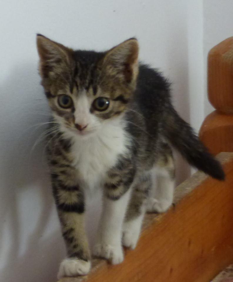 VENUS (ex TITI) - chaton femelle, née avril 2016 - En FA chez Abysse (92) - ADOPTEE PAR ANNE et FATLUM (depart94) Clocha10