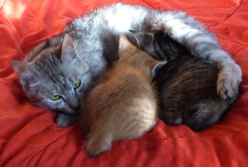 MUSLIN - chat femelle - Adoptée par Magali (Belgique) Mus610