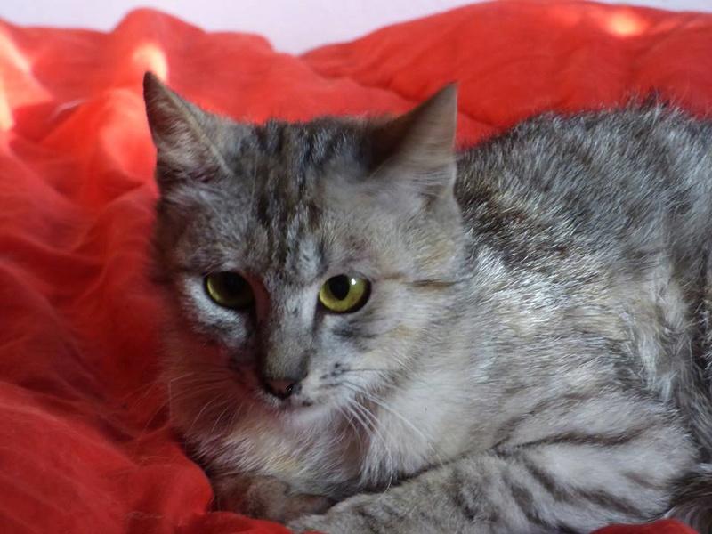 MUSLIN - chat femelle - Adoptée par Magali (Belgique) Muslin11