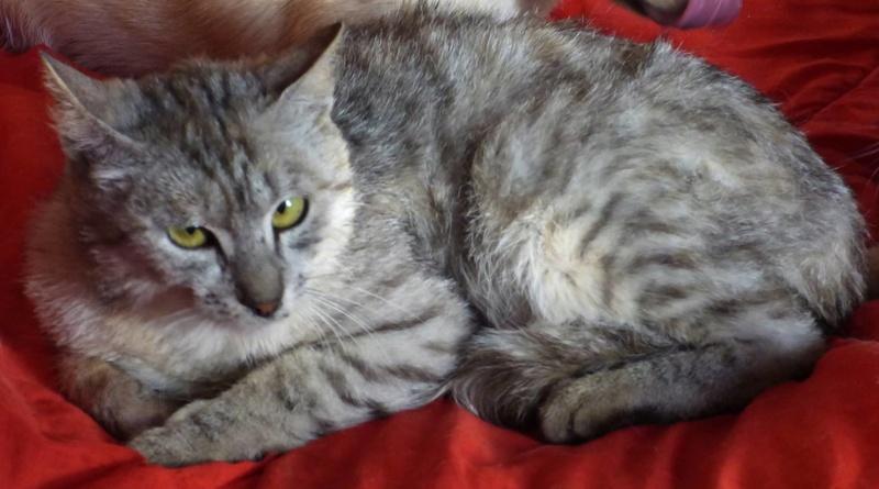 MUSLIN - chat femelle - Adoptée par Magali (Belgique) Muslin12