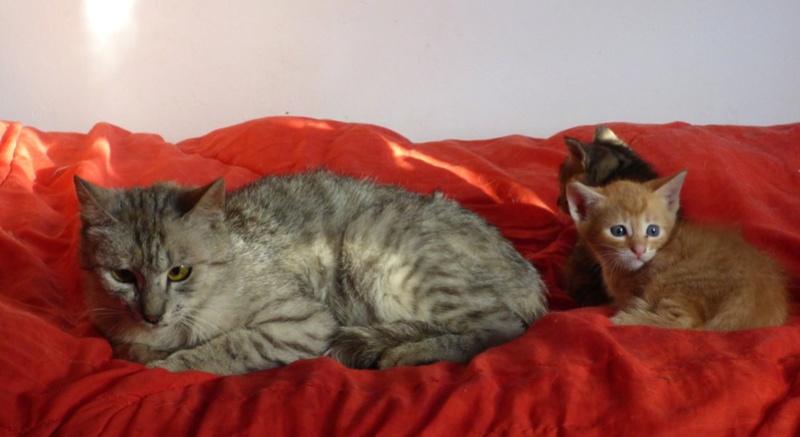 MUSLIN - chat femelle - Adoptée par Magali (Belgique) Muslin13