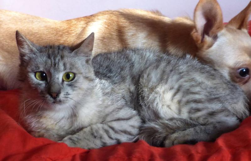 MUSLIN - chat femelle - Adoptée par Magali (Belgique) Muslin14