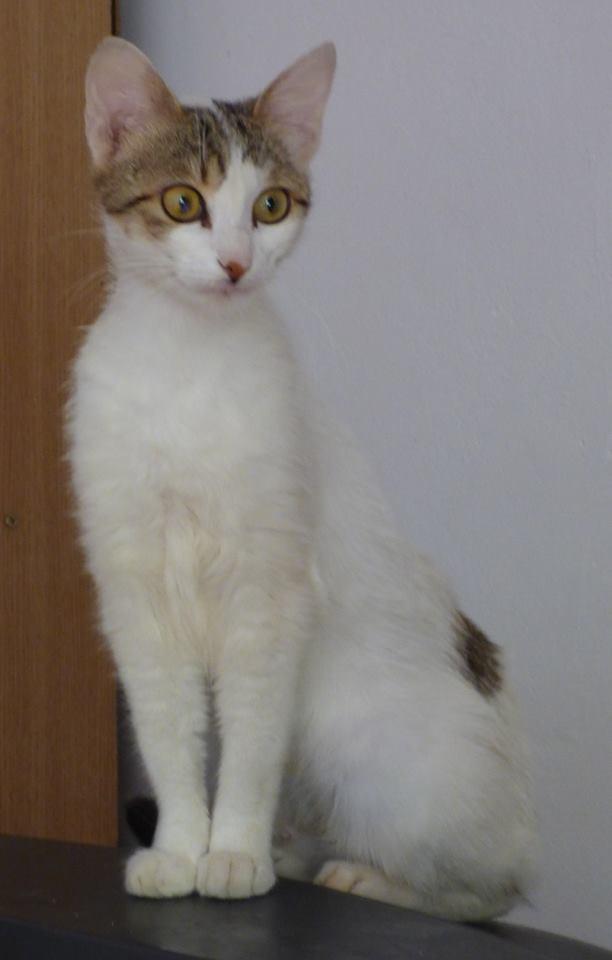 WENDY - chat femelle, née janvier 2015 - adoptée par Magali (Belgique) Wendy210