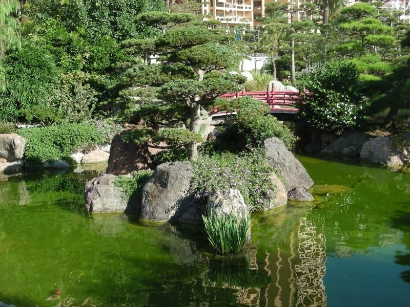 Jardin Japonais de Monaco, ça vous branche ? - Page 3 1_3610