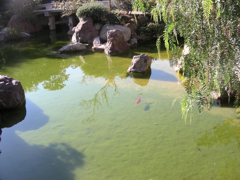 Jardin Japonais de Monaco, ça vous branche ? - Page 2 1_5011