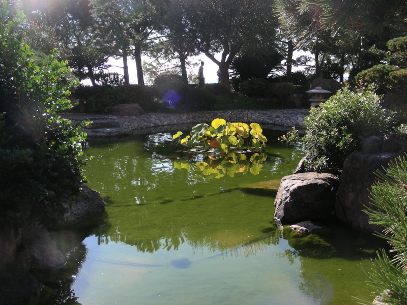 Jardin Japonais de Monaco, ça vous branche ? - Page 3 1_5210