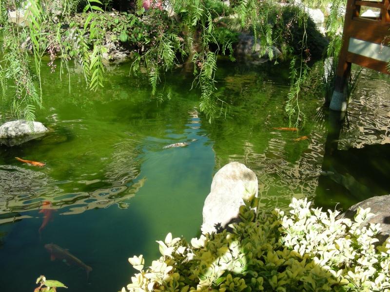 Jardin Japonais de Monaco, ça vous branche ? - Page 3 1_6610