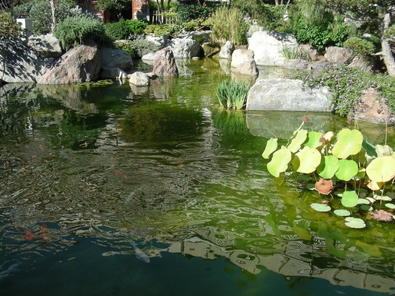 Jardin Japonais de Monaco, ça vous branche ? - Page 3 1_7510