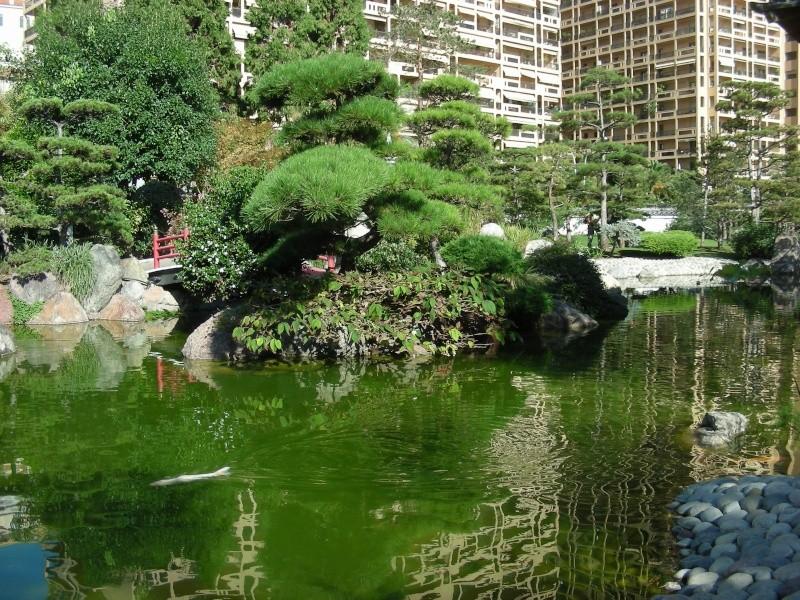 Jardin Japonais de Monaco, ça vous branche ? - Page 3 1_7910